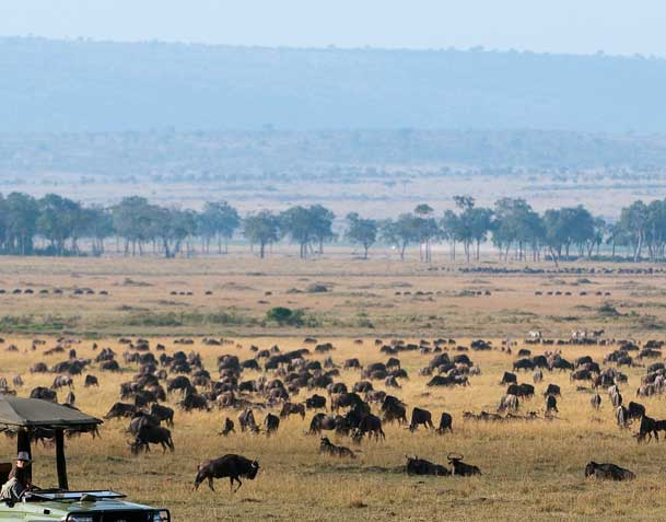 Africa tours and safaris